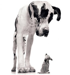 Big dog staring at little dog